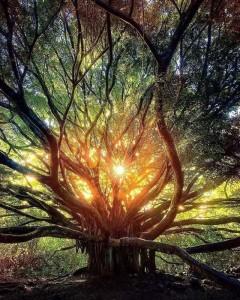 albero Flow
