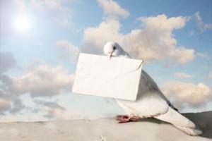 piccione-viaggiatore1
