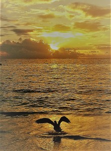Arrivo del sole col gabbiano (2)