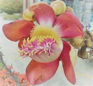 Fiore Albero Vita