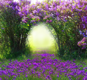 Magic spring forest