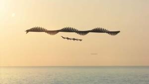volo-degli-uccelli-xavi-bou-1-840x473