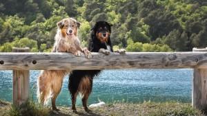 Cani barriera